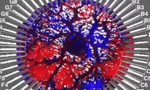 Image of an amoeba